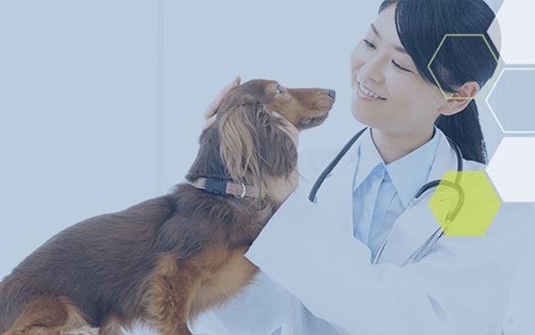 NSTから動物病院へのアクション